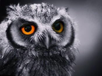 Как ужиться сове и жаворонку?