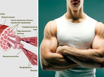 Молочная кислота и боль в мышцах