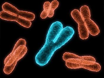Мужская хромосома Y