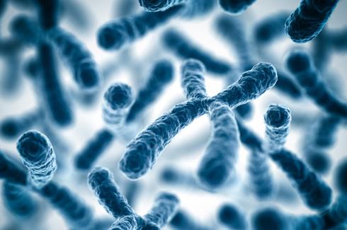 женские хромосомы
